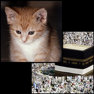 Video Kucing Mencium Ka'bah (Masjidil Haram - Mekah)