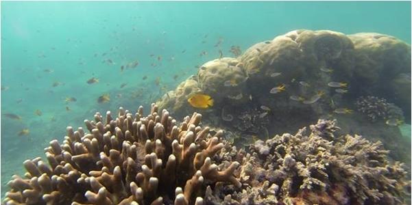 Keindahan Bawah Laut Pulau Tunda