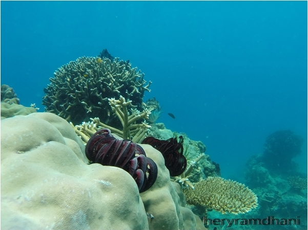 Underwater Pulau Tunda (Photo by Hery Ramdhani)